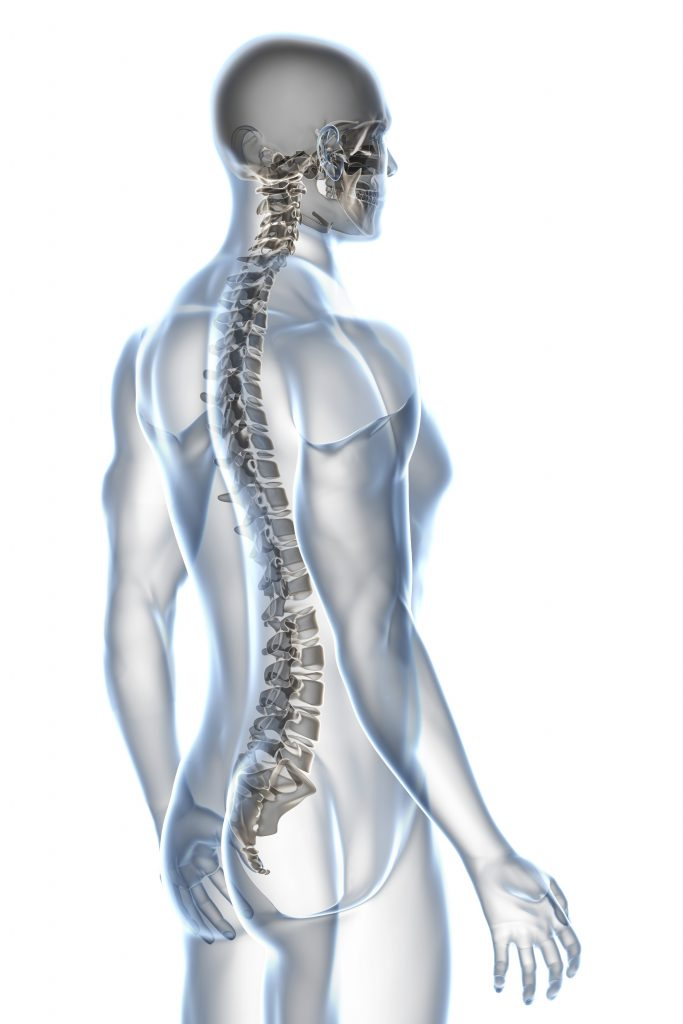X-ray male anatomy isolated over a white background